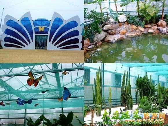 旅顺小南村七彩南山风景区在原有的蝶恋花蝴蝶园和